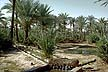 ALG70RC1_05 Date palm grove, irrigation channels & ditches, arid soil. In-Salah oasis, Tadema�t Plateau; Sahara Desert, Algeria. Copyright Tropix (R. Cansdale)