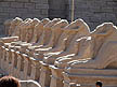 EGY09BB241 Avenue of sculpted sphinxes guard entrance route to ancient building. Karnak Temple, Luxor, Egypt Copyright Tropix (Bethany Birley)