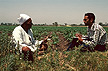 EGY95TX5_08 Cotton farmer sits in field, talks with zoology graduate; clipboard; health impact assessment interview. Helwan, Egypt. Copyright Tropix (V. and M. Birley)