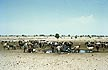 NIG69RA12D Nomads with camels and cattle at watering hole near Lake Chad; desertification; Sahel 1969; Northen Nigeria. Copyright Tropix (R. Ashford)