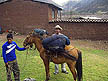 PER07RB162 Guide with laden horse & tourist: rustic brick houses; start of Choquequirao trek. Sacred Valley, Andes Mtns, Peru. Copyright Tropix (Roland Birley)