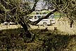 TNZ00TX21_20 View past shady tree to seated lionesses; safari vehicle full of eco-tourists beyond, watching. Serengeti, Tanzania. Copyright Tropix (V. and M. Birley)